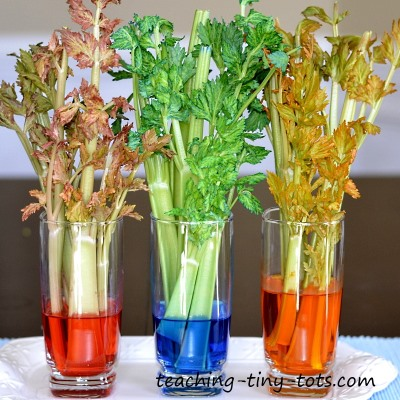 Celery Experiment, Learn How Plants Absorb Water in this Kids Science ...