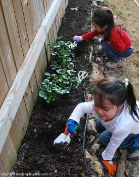 planting an herb garden