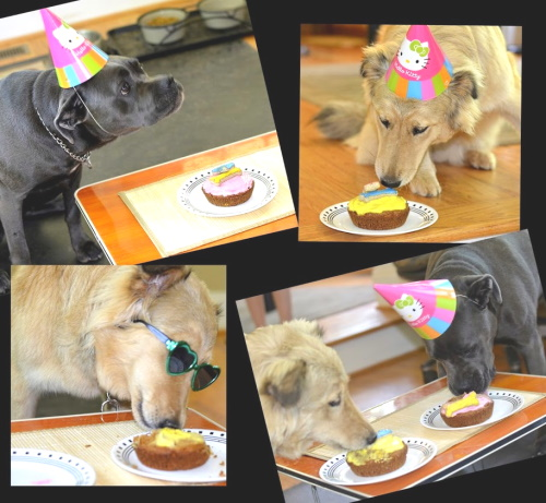 Dog Birthday Party Ideas: Decorations, recipes and costumes.