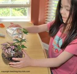 Add water to your soda bottle terrarium