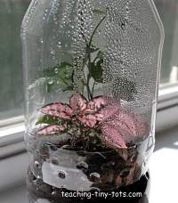 Toddler Science Make A Soda Bottle Terrarium With Your Child