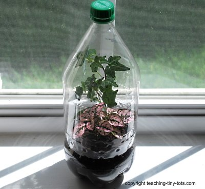 Build a Soda Bottle Terrarium