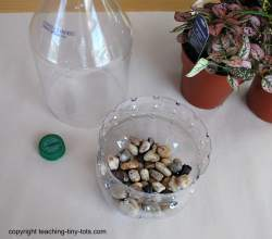 how to make a terrarium using a soda bottle