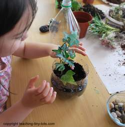 adding plants to your soda bottle terrarium